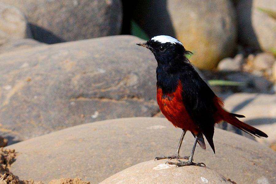 Bhutan Birding Tour from West to East