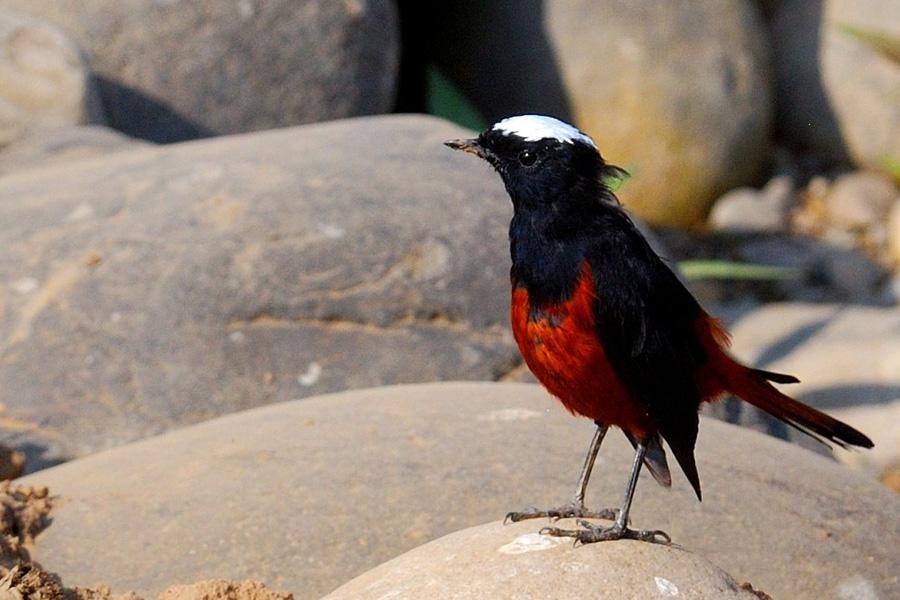 Bhutan Birding Tour from West to East