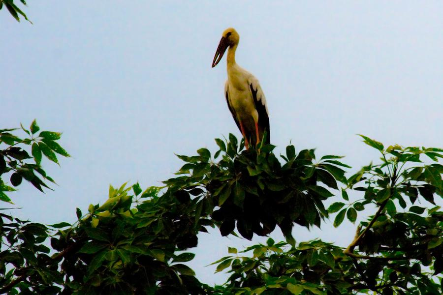 Bird Watching Packages Tour in Nepal