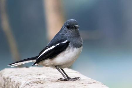 Birding & Tour in Bhutan