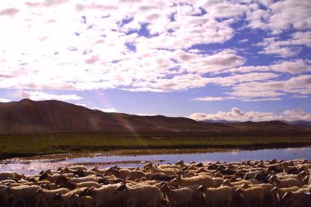 Lhasa, Mt. Kailash & Manasarovar trek
